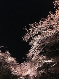 3花見2017.jpg